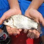 Pescuitul, joacă de copil