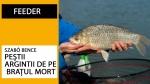 Peștii argintii de pe brațul mort